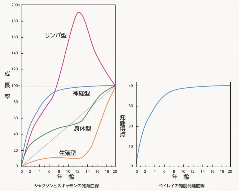 発育曲線と知能発達曲線