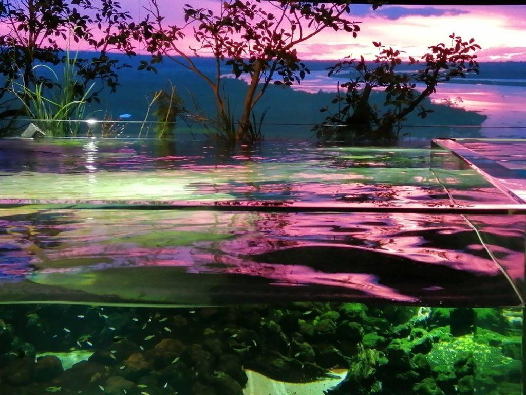 館内写真:イルミネーションされた水槽