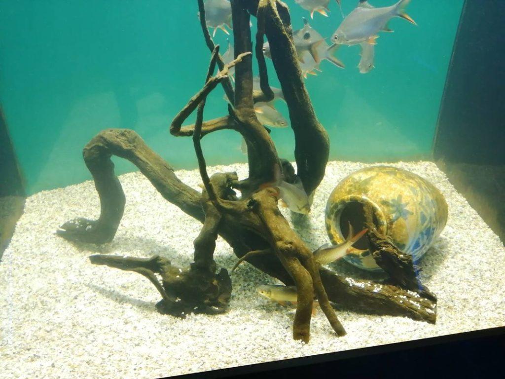 館内写真:魚